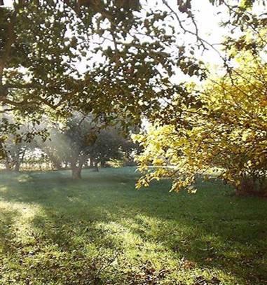 Herbst und Weihnachten_image13